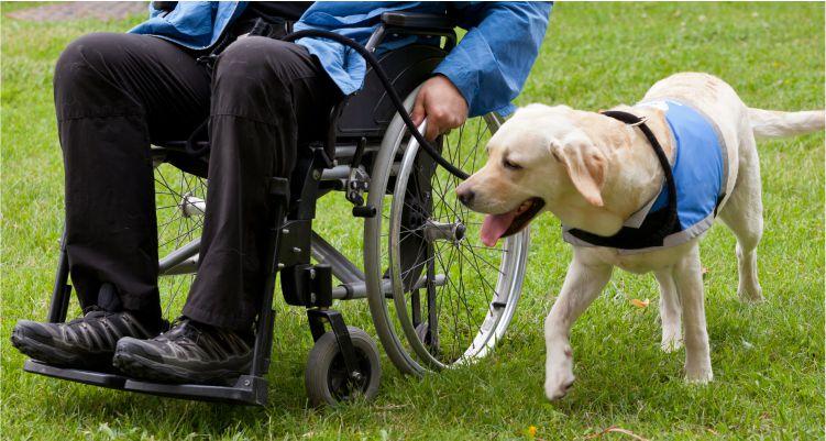 Disability Lawyer Levittown PA